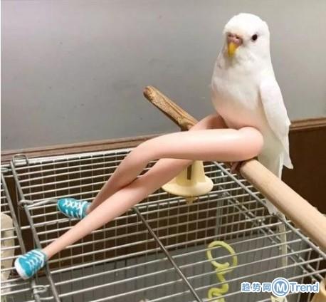 这大长腿也太性感了!